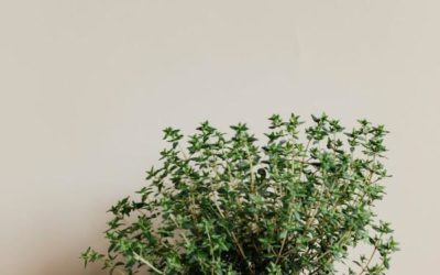 The Best Things About Herb Gardening